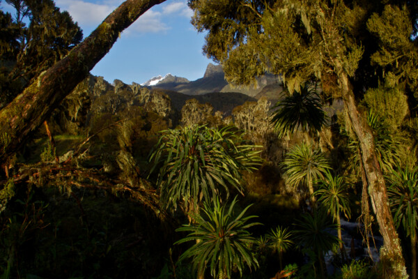 Mount Stanley, Ruwenzori (c) Photo: Felix Berg
